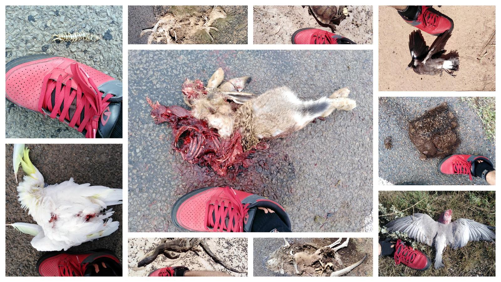 Roadkill on road from Narrabri to Wee Waa, NSW