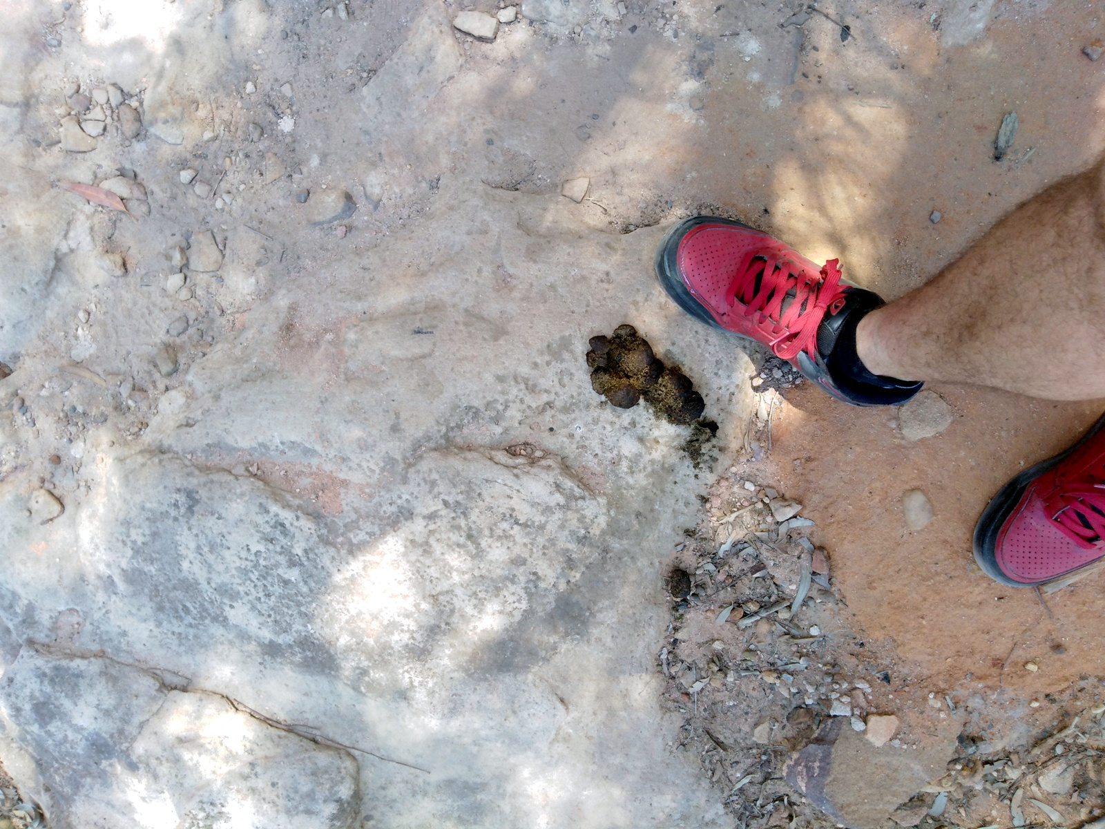 Wombat poo at Sandstone Caves in Pilliga Forest
