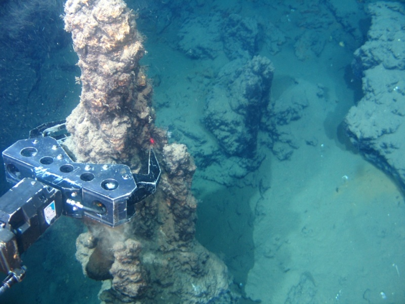 an analysis of the ecosystems in hydrothermal vents Sponge prokaryote communities in taiwanese coral reef and shallow hydrothermal vent ecosystems  between sponges collected in coral reef and in hydrothermal vents.