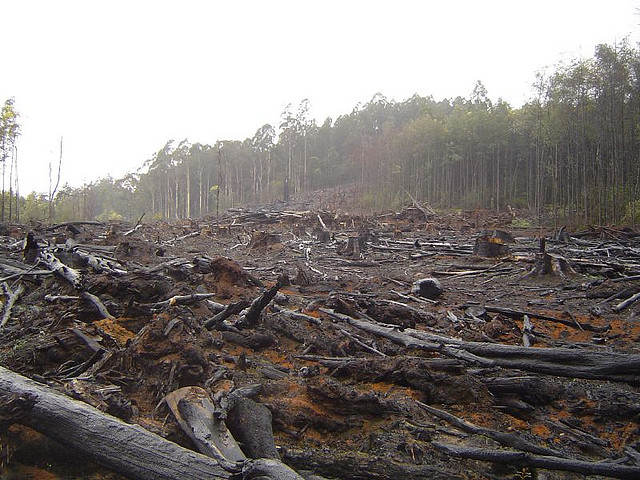 10 Reasons Not To Include Burning Native Forests In The