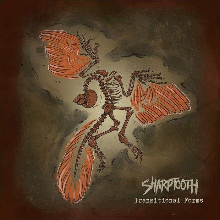 SHARPTOOTH - TRANSITIONAL FORMS album artwork