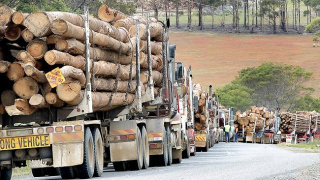 New twists in Tasmania's forest industry crisis | Green Left