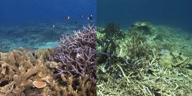 Coral Bleaching Hits Great Barrier Reef As Temperatures Soar